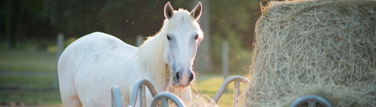 Leilani Mae Horse Rescue